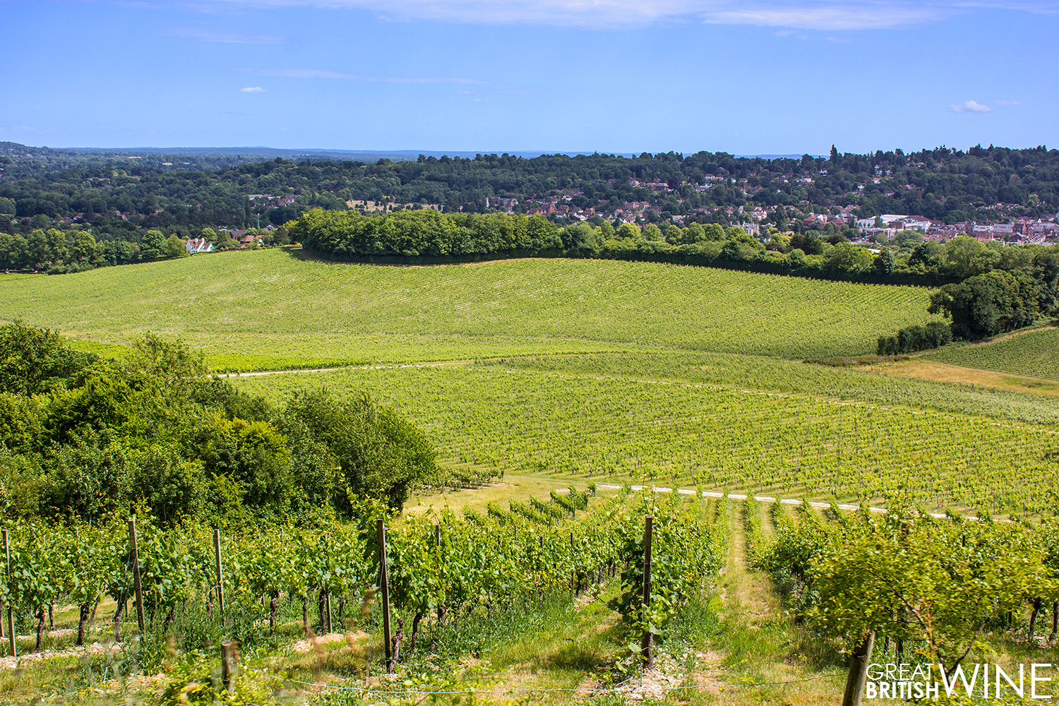 denbies_vineyard-overlook