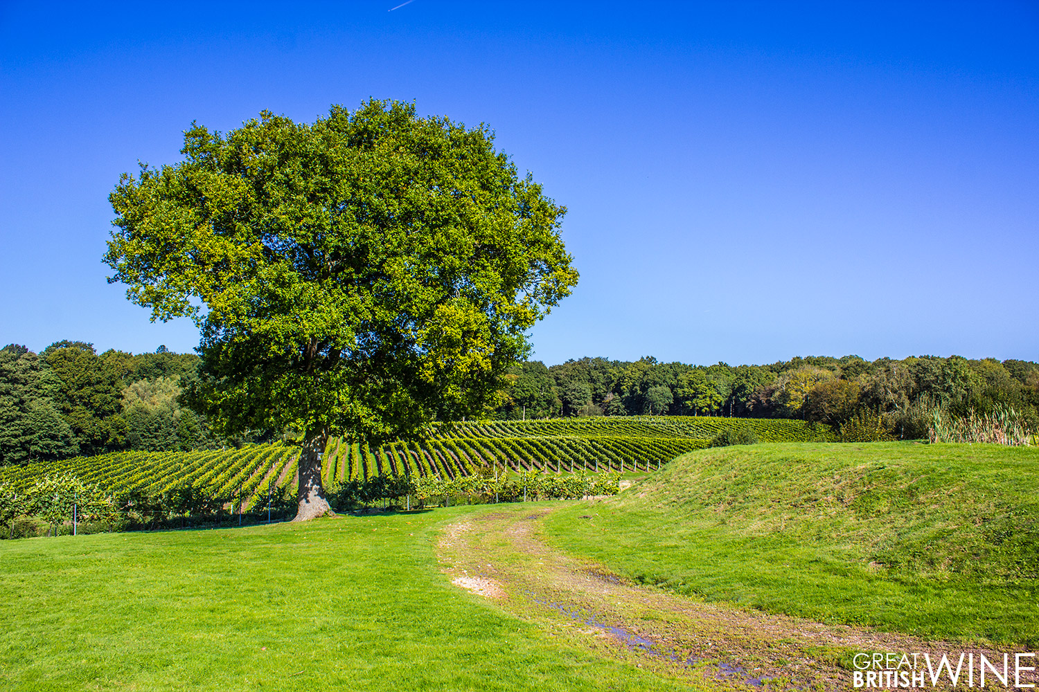 bluebell_vineyard
