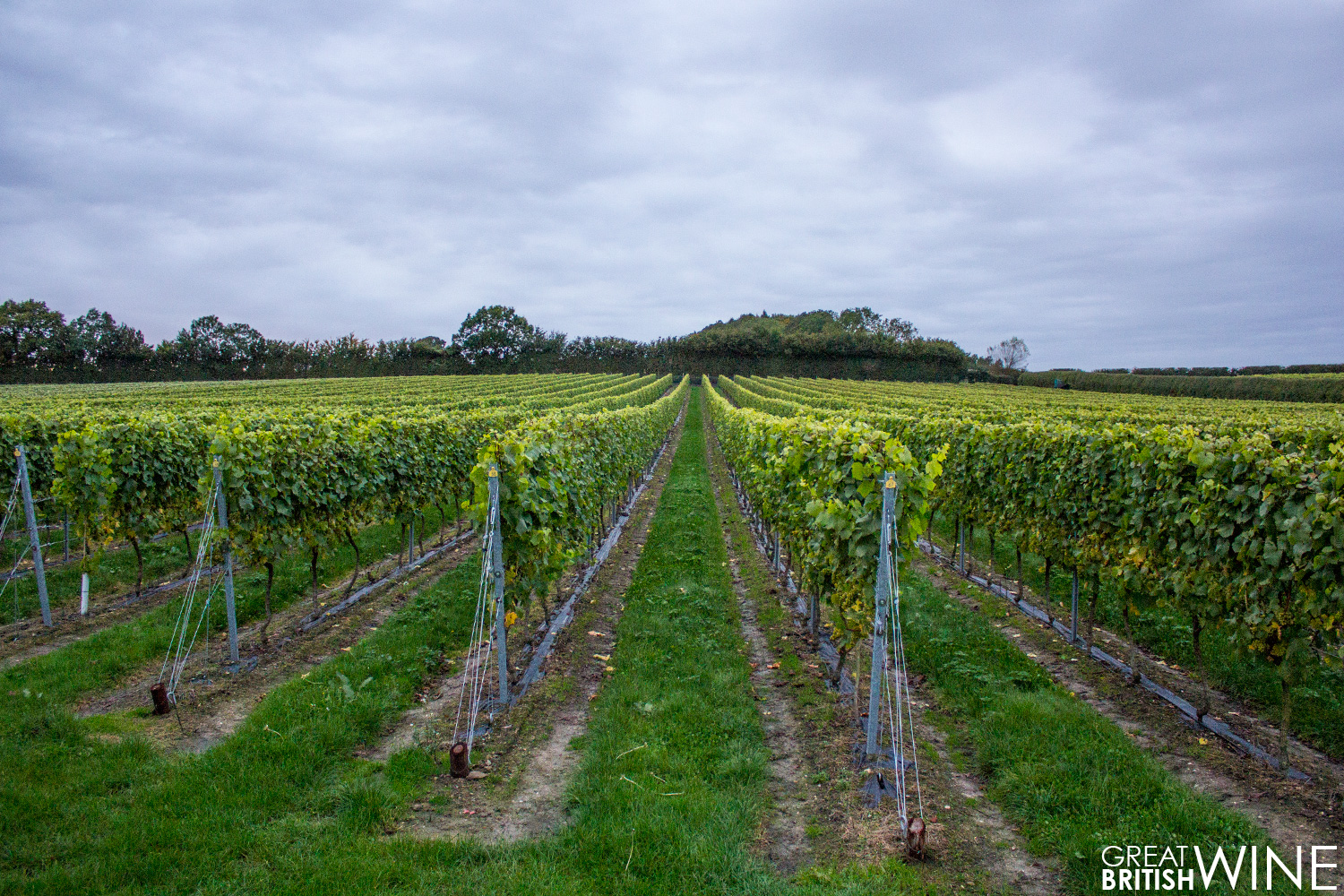 jenkynplace_vineyard1