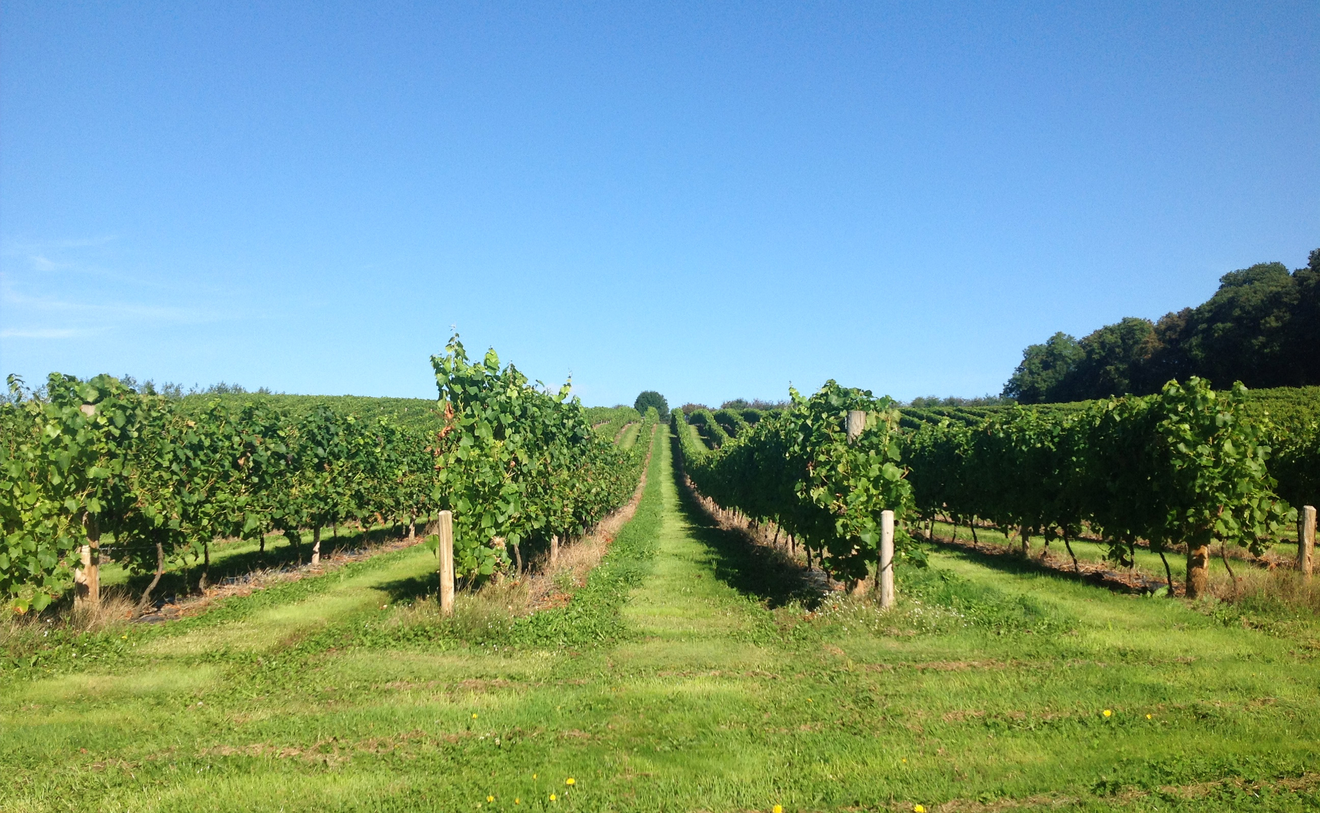 Vineyard image provided by Sixteen Ridges