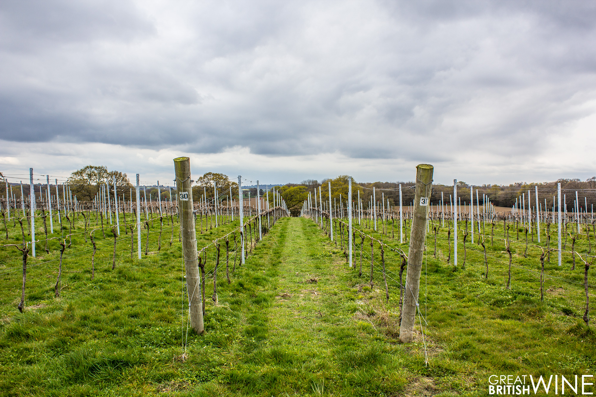 woodchurch_vineyard1