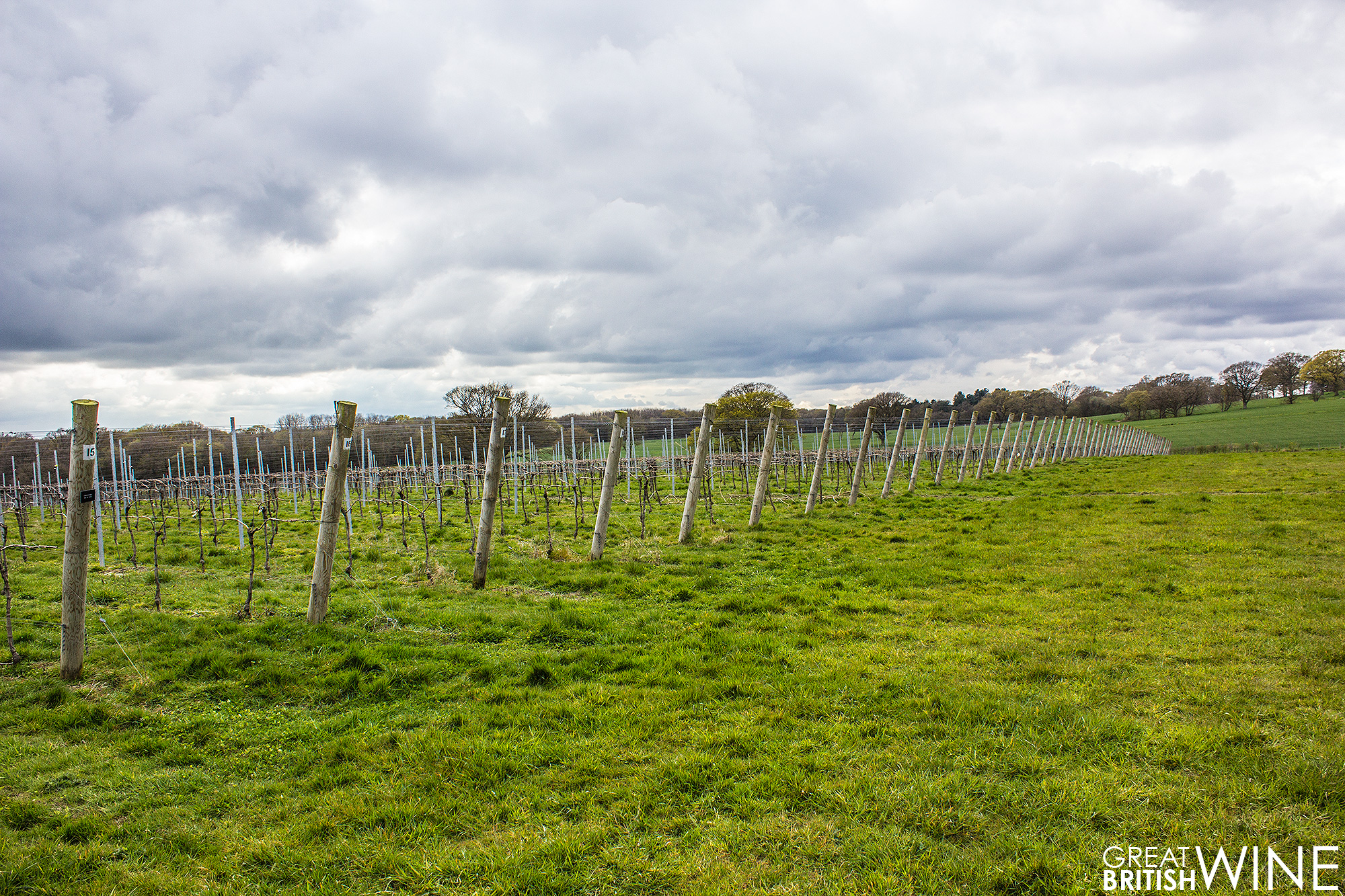 woodchurch_vineyard4