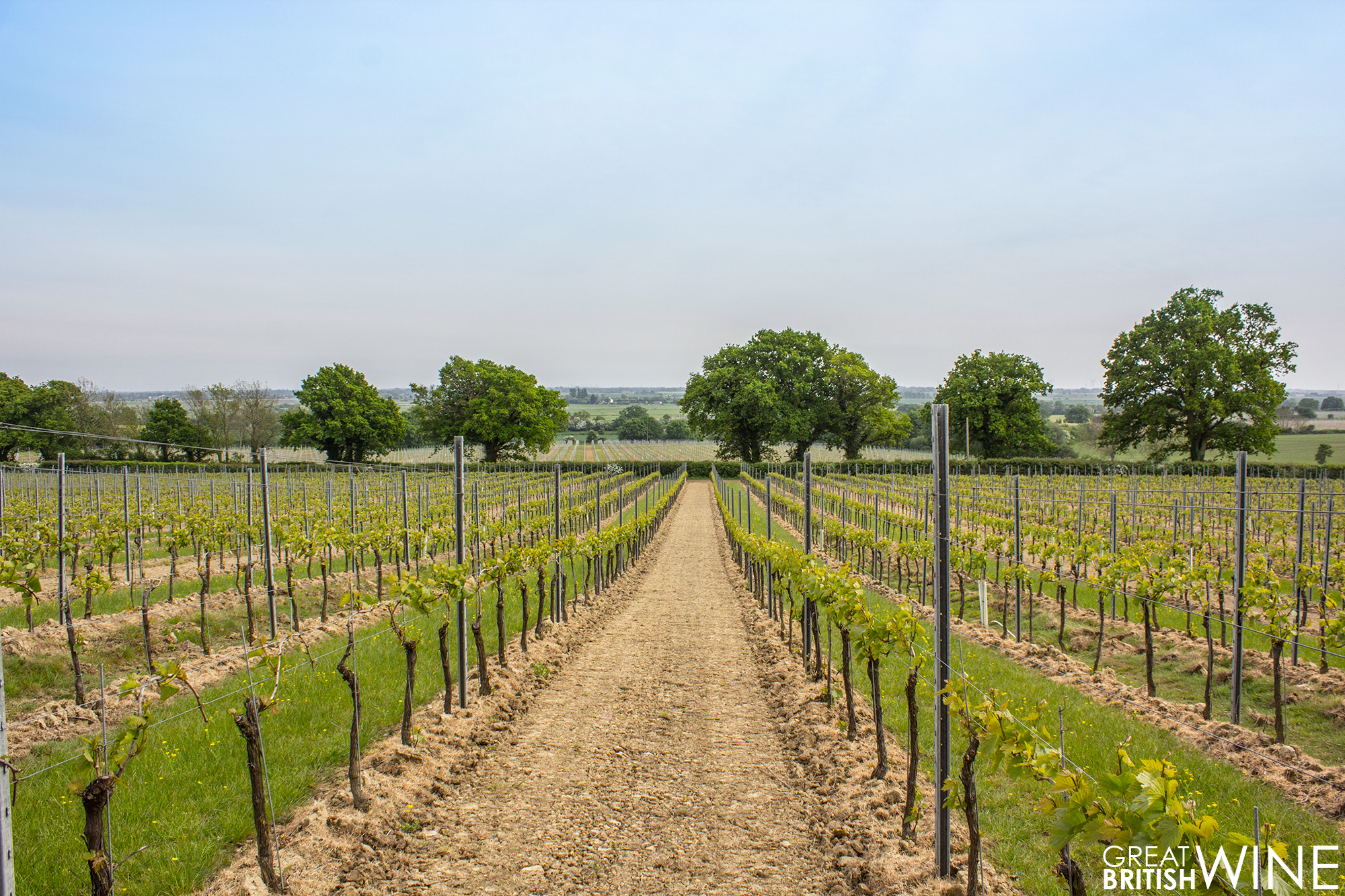 gusbourne_vineyard1