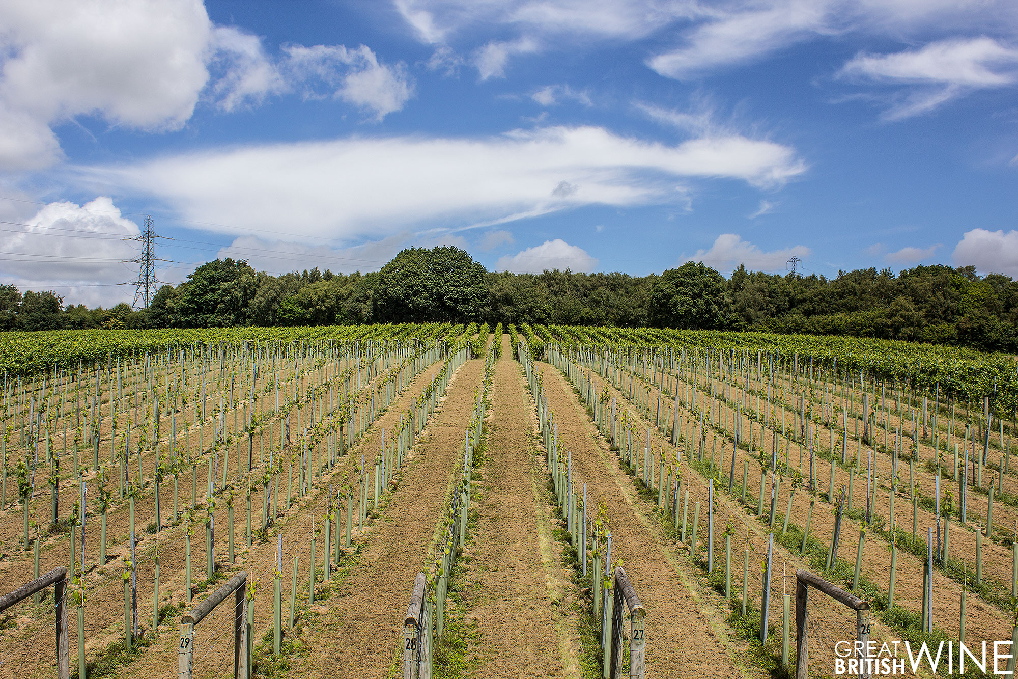 bolney_vineyard1