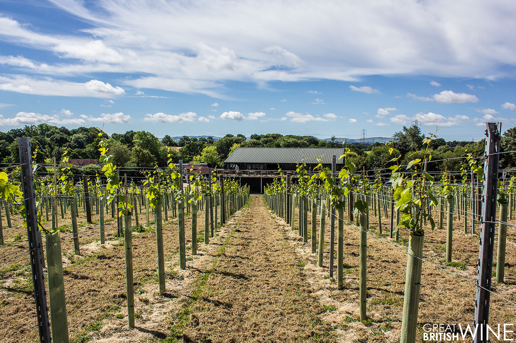 bolney_vineyard2