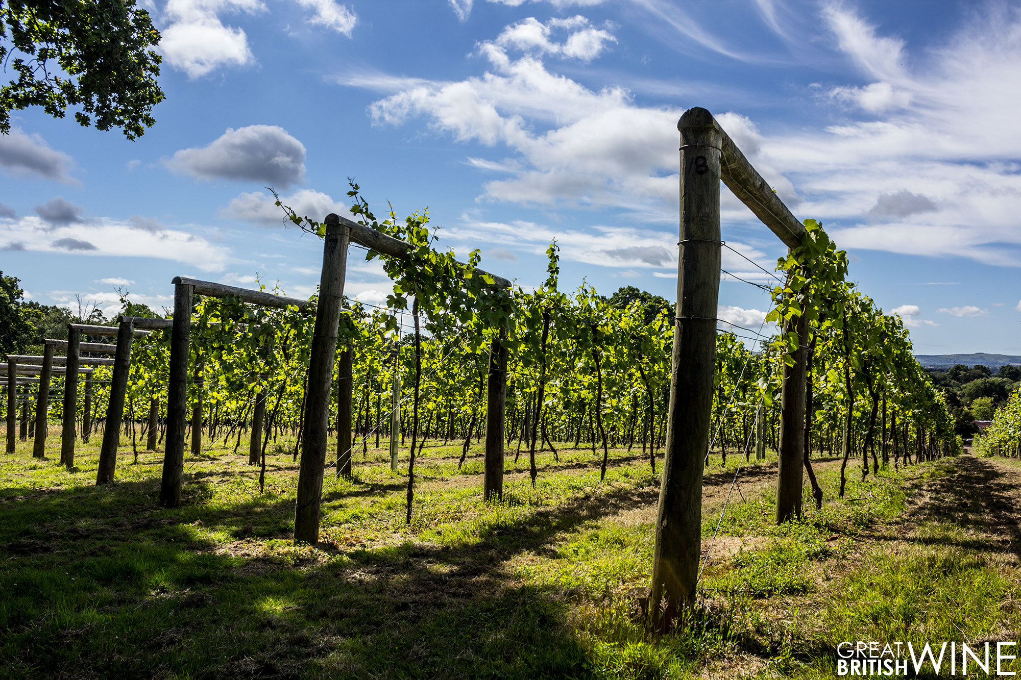 bolney_vineyard3