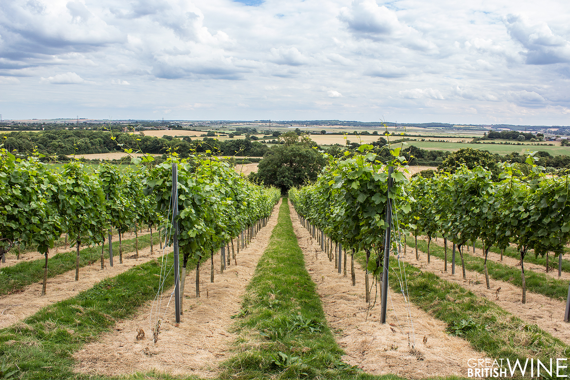 martinslane_vineyard