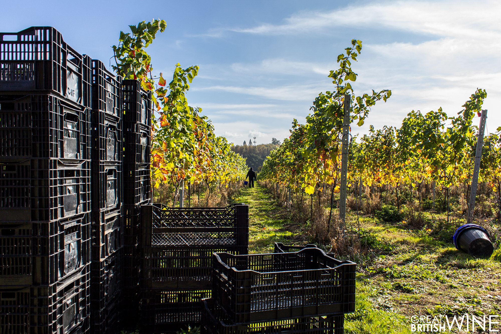 harvest2016_squerryes_crates
